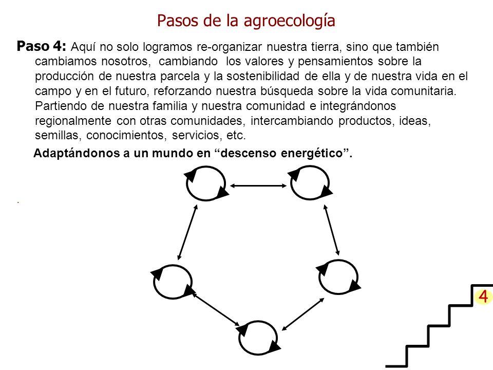 Pasos de la agroecología Paso 4: Aquí no solo logramos re-organizar nuestra tierra, sino que también cambiamos nosotros, cambiando los valores y pensamientos sobre la producción de nuestra parcela y la sostenibilidad de ella y de nuestra vida en el campo y en el futuro, reforzando nuestra búsqueda sobre la vida comunitaria.