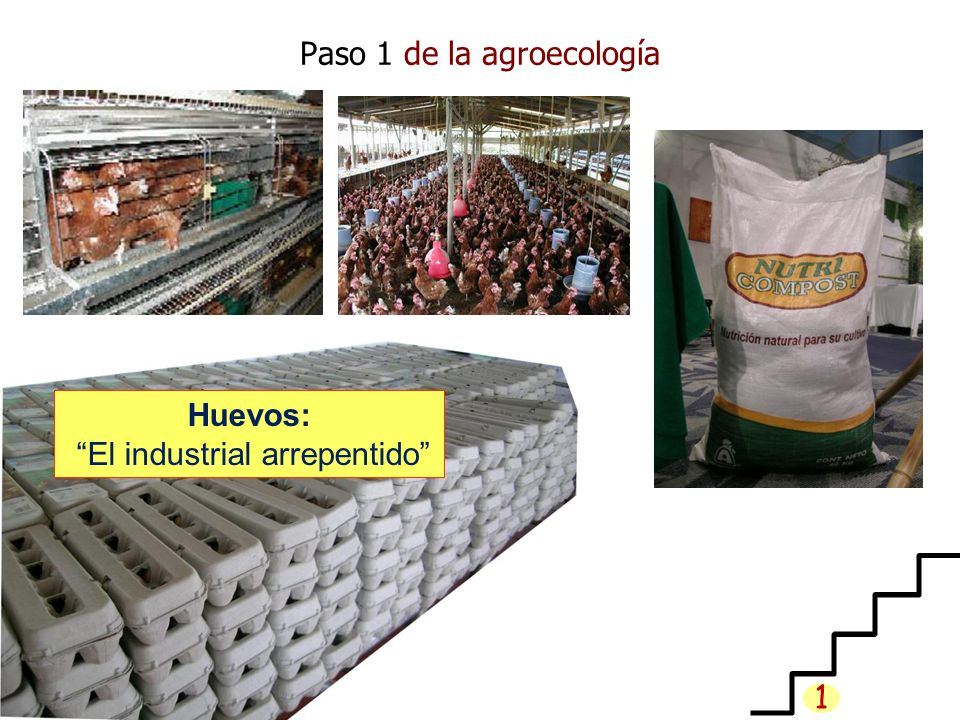 Paso 1 de la agroecología Huevos: El industrial arrepentido 1