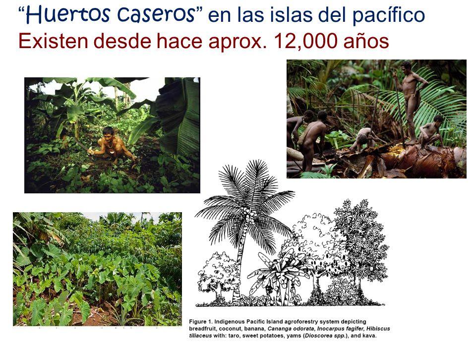 Huertos caseros en las islas del pacífico Existen desde hace aprox. 12,000 años