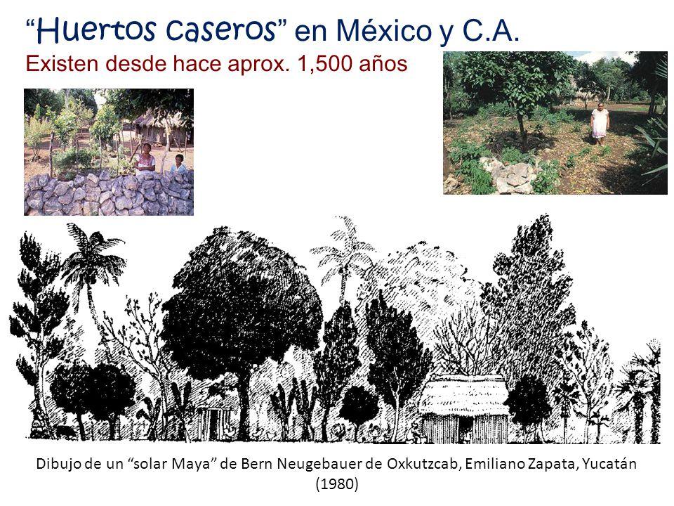 Huertos caseros en México y C.A. Existen desde hace aprox. 1,500 años Dibujo de un solar Maya de Bern Neugebauer de Oxkutzcab, Emiliano Zapata, Yucatá