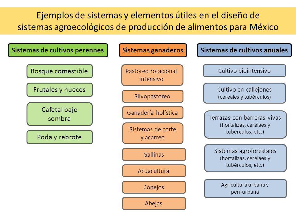 Ejemplos de sistemas y elementos útiles en el diseño de sistemas agroecológicos de producción de alimentos para México Sistemas ganaderos Pastoreo rot