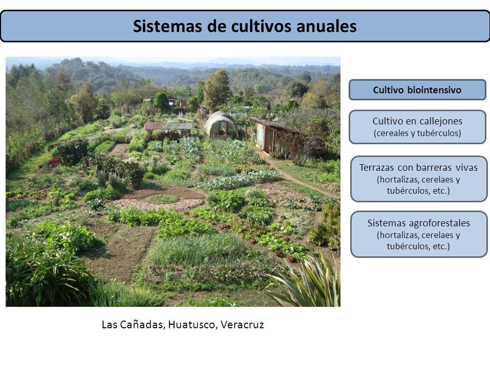 Sistemas de cultivos anuales Tierra del sol, Tlacochahuaya, Valles centrales, Oaxaca Las Cañadas, Huatusco, Veracruz Cultivo biointensivo Cultivo en c