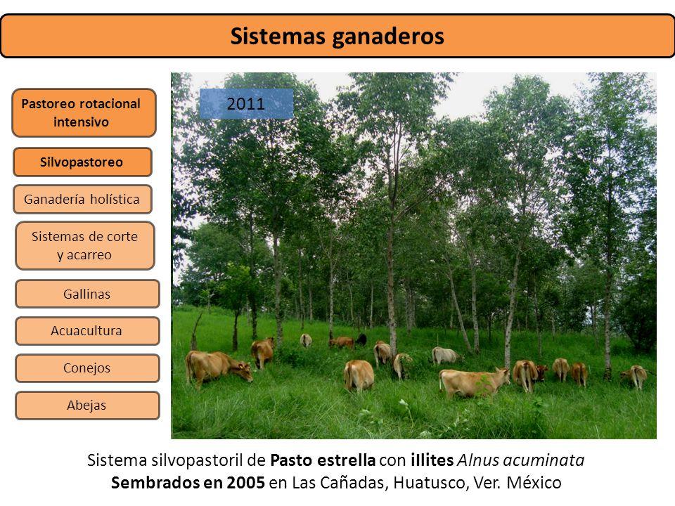 Sistemas ganaderos Pastoreo rotacional intensivo Sistemas de corte y acarreo Silvopastoreo Gallinas Conejos Abejas Acuacultura Ganadería holística Sis