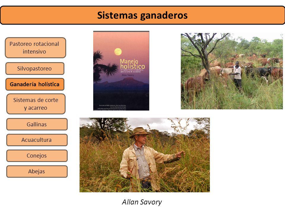 Sistemas ganaderos Pastoreo rotacional intensivo Sistemas de corte y acarreo Silvopastoreo Gallinas Conejos Abejas Acuacultura Ganadería holística All