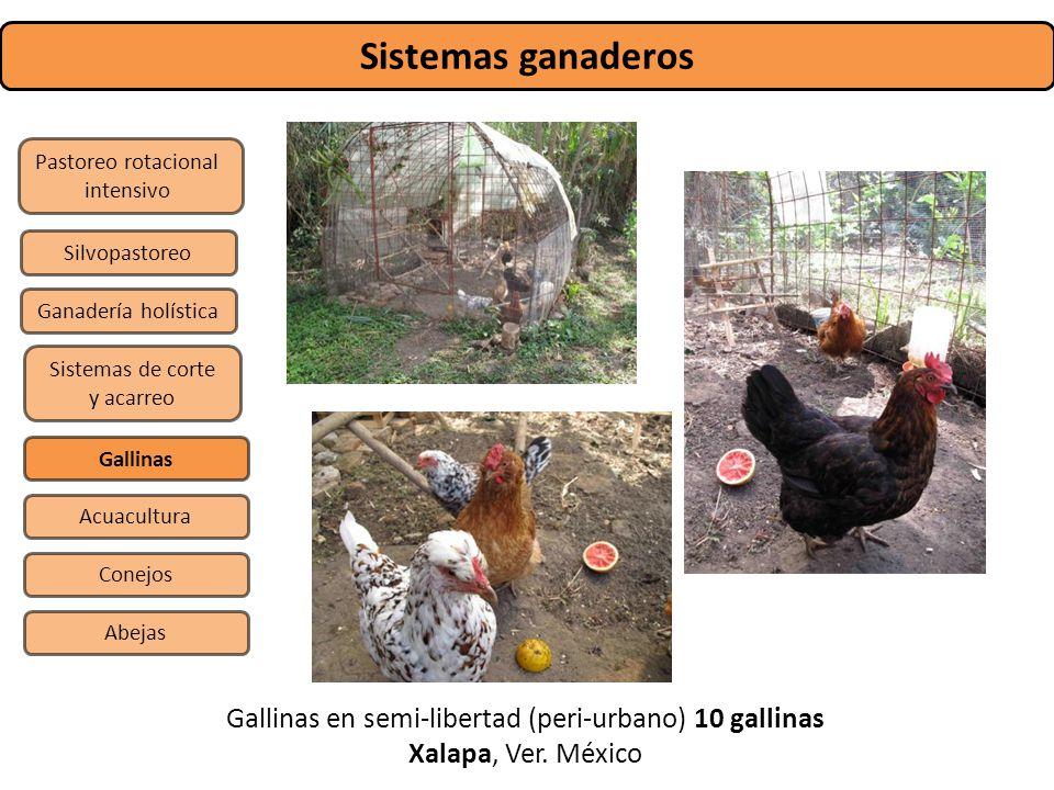 Sistemas ganaderos Pastoreo rotacional intensivo Sistemas de corte y acarreo Silvopastoreo Gallinas Conejos Abejas Acuacultura Ganadería holística Gal