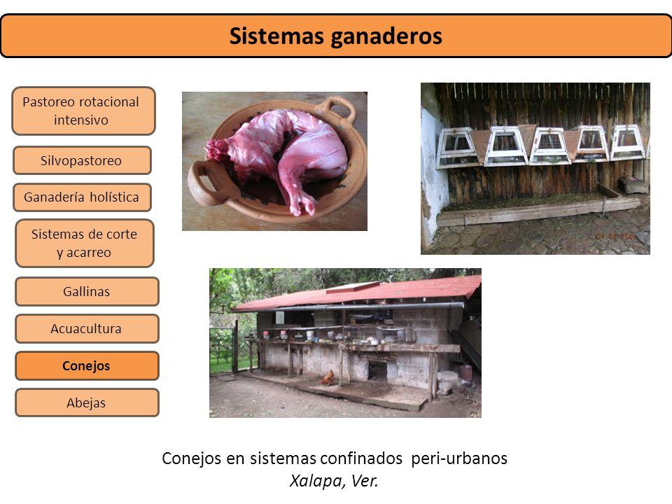Sistemas ganaderos Pastoreo rotacional intensivo Sistemas de corte y acarreo Silvopastoreo Gallinas Conejos Abejas Acuacultura Ganadería holística Con