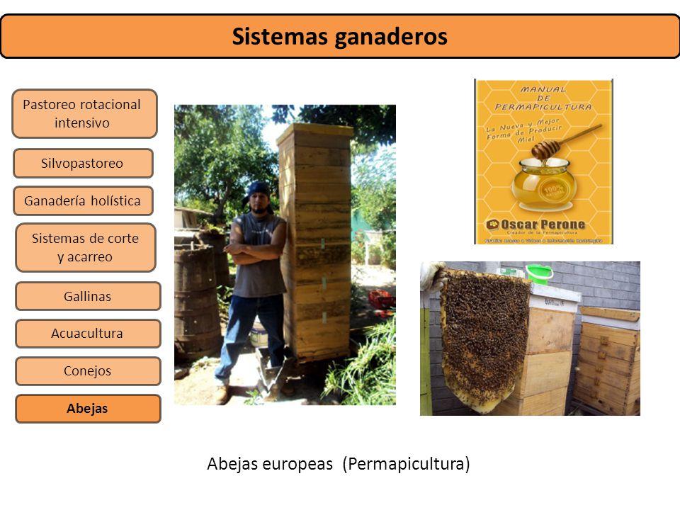 Sistemas ganaderos Pastoreo rotacional intensivo Sistemas de corte y acarreo Silvopastoreo Gallinas Conejos Abejas Acuacultura Ganadería holística Abe