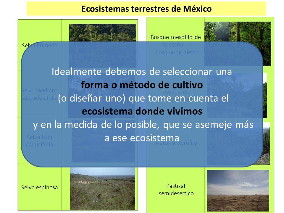 Ecosistemas terrestres de México Idealmente debemos de seleccionar una forma o método de cultivo (o diseñar uno) que tome en cuenta el ecosistema dond