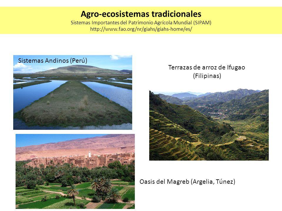 Cultivo integrado de arroz y peces (China) Jardines de limones (Sur de Italia) Sistemas de irrigación Qanat y huertas caseras (Irán) Agro-ecosistemas tradicionales Sistemas Importantes del Patrimonio Agrícola Mundial (SIPAM) http://www.fao.org/nr/giahs/giahs-home/es/