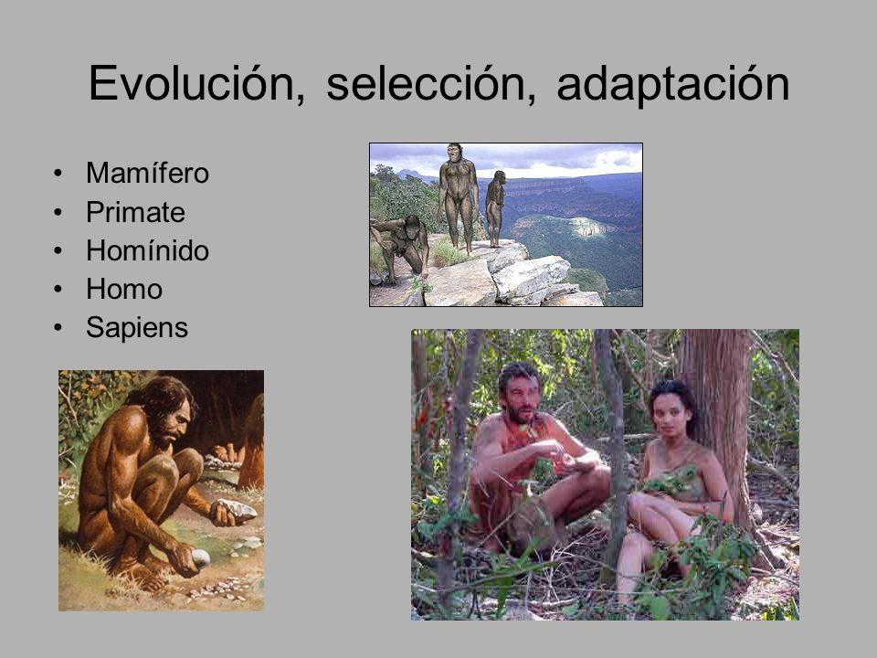 Homo de tercera generación Es posible un homo sapiens, sapiens, sapiens.