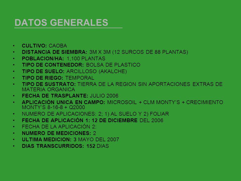 DATOS GENERALES CULTIVO: CAOBA DISTANCIA DE SIEMBRA: 3M X 3M (12 SURCOS DE 88 PLANTAS) POBLACION/HA: 1,100 PLANTAS TIPO DE CONTENEDOR: BOLSA DE PLASTICO TIPO DE SUELO: ARCILLOSO (AKALCHE) TIPO DE RIEGO: TEMPORAL TIPO DE SUSTRATO: TIERRA DE LA REGION SIN APORTACIONES EXTRAS DE MATERIA ORGANICA FECHA DE TRASPLANTE: JULIO 2006 APLICACIÓN UNICA EN CAMPO: MICROSOIL + CLM MONTYS + CRECIMIENTO MONTYS 8-16-8 + Q2000 NUMERO DE APLICACIONES: 2; 1) AL SUELO Y 2) FOLIAR FECHA DE APLICACIÓN 1: 12 DE DICIEMBRE DEL 2006 FECHA DE LA APLICACIÓN 2: NUMERO DE MEDICIONES: 2 ULTIMA MEDICION: 3 MAYO DEL 2007 DIAS TRANSCURRIDOS: 152 DIAS