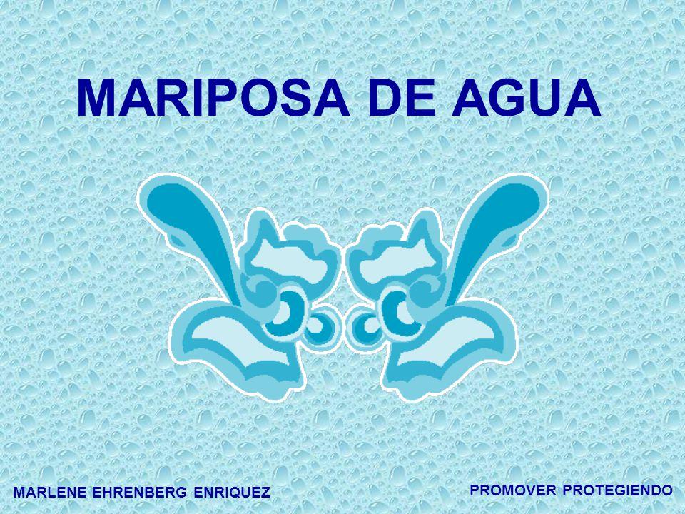 MARIPOSA DE AGUA PROMOVER PROTEGIENDO MARLENE EHRENBERG ENRIQUEZ