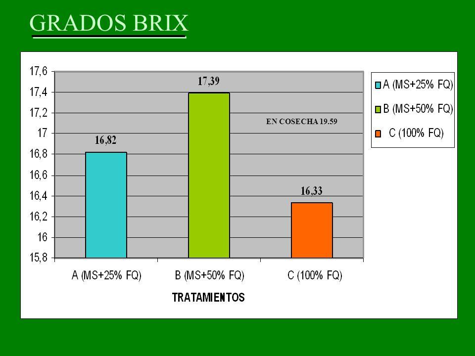 GRADOS BRIX EN COSECHA 19.59