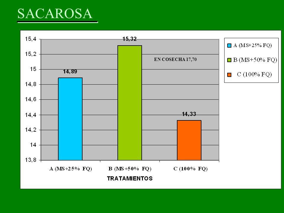 SACAROSA EN COSECHA 17,70