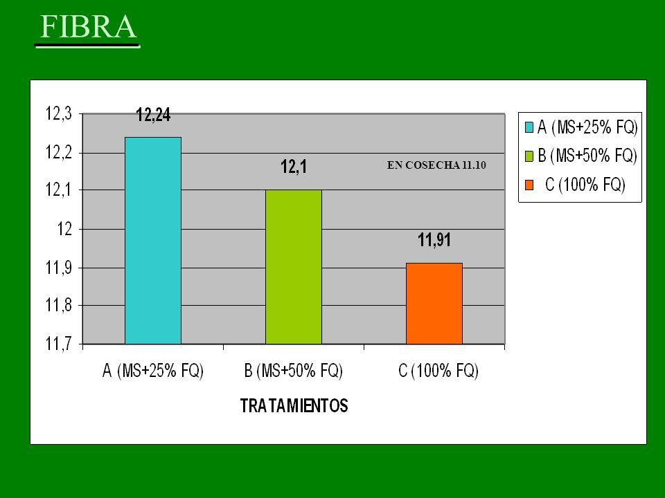 FIBRA EN COSECHA 11.10
