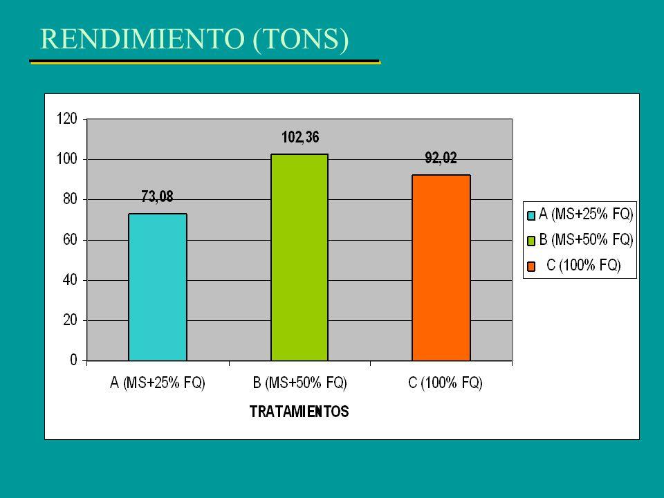RENDIMIENTO (TONS)