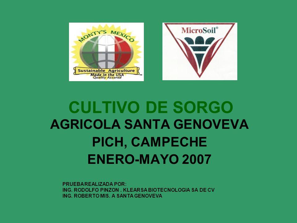 CULTIVO DE SORGO AGRICOLA SANTA GENOVEVA PICH, CAMPECHE ENERO-MAYO 2007 PRUEBA REALIZADA POR: ING. RODOLFO PINZON. KLEARSA BIOTECNOLOGIA SA DE CV ING.