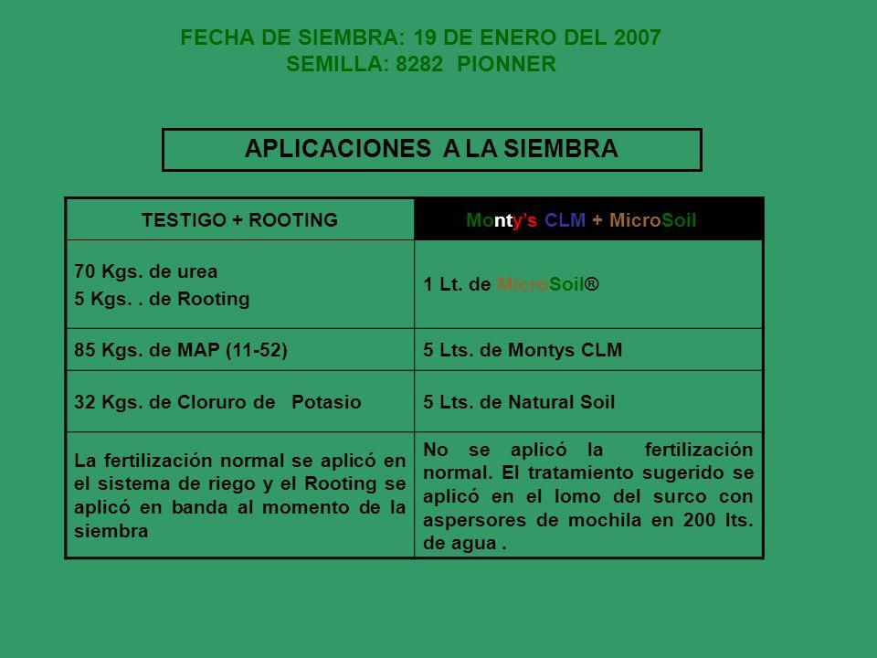 FECHA DE SIEMBRA: 19 DE ENERO DEL 2007 SEMILLA: 8282 PIONNER TESTIGO + ROOTINGMontys CLM + MicroSoil® 70 Kgs. de urea 5 Kgs.. de Rooting 1 Lt. de Micr