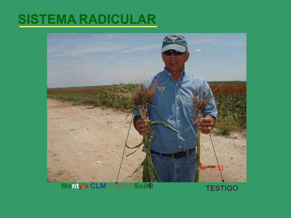 SISTEMA RADICULAR TESTIGO Montys CLM + MicroSoil®