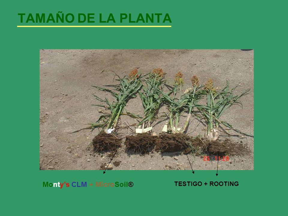 TAMAÑO DE LA PLANTA Montys CLM + MicroSoil® TESTIGO + ROOTING