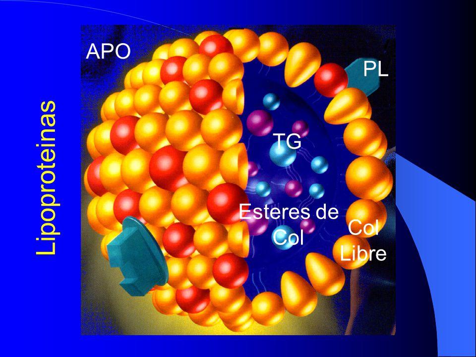 TG Esteres de Col PL Col Libre APO Lipoproteinas