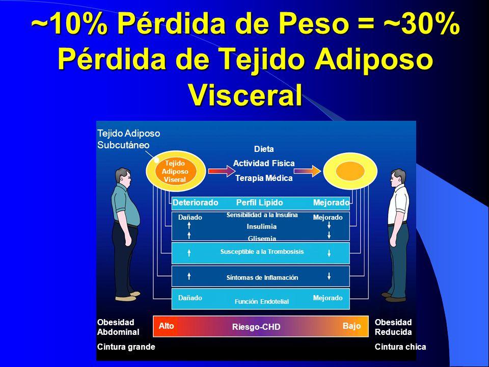 ~10% Pérdida de Peso = ~30% Pérdida de Tejido Adiposo Visceral Tejido Adiposo Subcutáneo Dieta Actividad Física Terapia Médica Obesidad Abdominal Cint