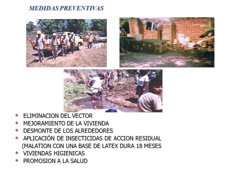 MEDIDAS PREVENTIVAS ELIMINACION DEL VECTOR ELIMINACION DEL VECTOR MEJORAMIENTO DE LA VIVIENDA MEJORAMIENTO DE LA VIVIENDA DESMONTE DE LOS ALREDEDORES DESMONTE DE LOS ALREDEDORES APLICACIÓN DE INSECTICIDAS DE ACCION RESIDUAL APLICACIÓN DE INSECTICIDAS DE ACCION RESIDUAL (MALATION CON UNA BASE DE LATEX DURA 18 MESES (MALATION CON UNA BASE DE LATEX DURA 18 MESES VIVIENDAS HIGIENICAS VIVIENDAS HIGIENICAS PROMOSION A LA SALUD PROMOSION A LA SALUD
