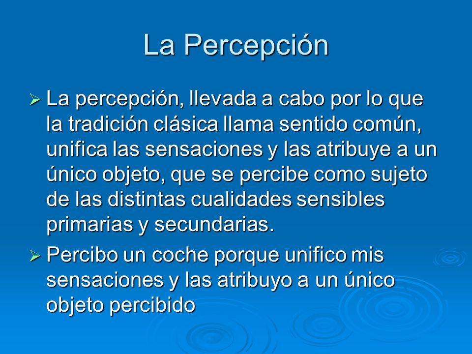 La Percepción La percepción, llevada a cabo por lo que la tradición clásica llama sentido común, unifica las sensaciones y las atribuye a un único obj