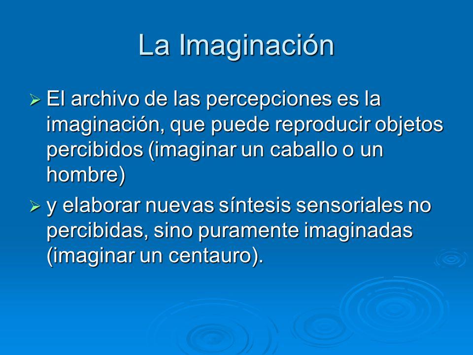 La Imaginación El archivo de las percepciones es la imaginación, que puede reproducir objetos percibidos (imaginar un caballo o un hombre) El archivo