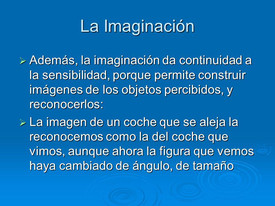 La Imaginación Además, la imaginación da continuidad a la sensibilidad, porque permite construir imágenes de los objetos percibidos, y reconocerlos: A