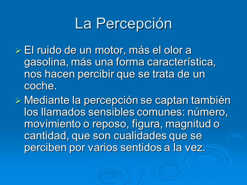 La Percepción La percepción, llevada a cabo por lo que la tradición clásica llama sentido común, unifica las sensaciones y las atribuye a un único objeto, que se percibe como sujeto de las distintas cualidades sensibles primarias y secundarias.