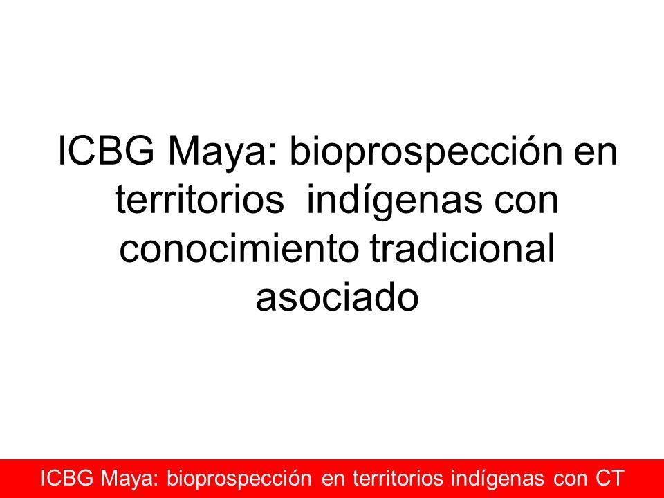 ICBG Maya: bioprospección en territorios indígenas con conocimiento tradicional asociado ICBG Maya: bioprospección en territorios indígenas con CT