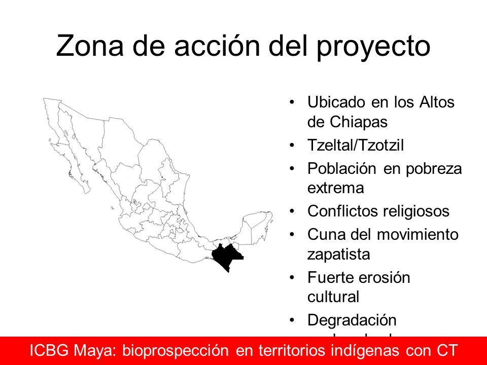 Zona de acción del proyecto Ubicado en los Altos de Chiapas Tzeltal/Tzotzil Población en pobreza extrema Conflictos religiosos Cuna del movimiento zap