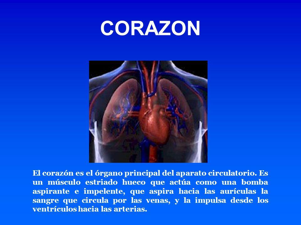 El corazón es el órgano principal del aparato circulatorio. Es un músculo estriado hueco que actúa como una bomba aspirante e impelente, que aspira ha
