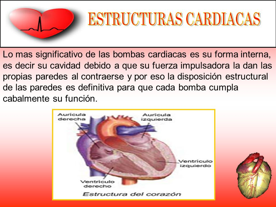 Lo mas significativo de las bombas cardiacas es su forma interna, es decir su cavidad debido a que su fuerza impulsadora la dan las propias paredes al