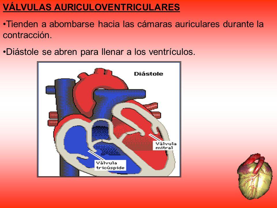 VÁLVULAS AURICULOVENTRICULARES Tienden a abombarse hacia las cámaras auriculares durante la contracción. Diástole se abren para llenar a los ventrícul
