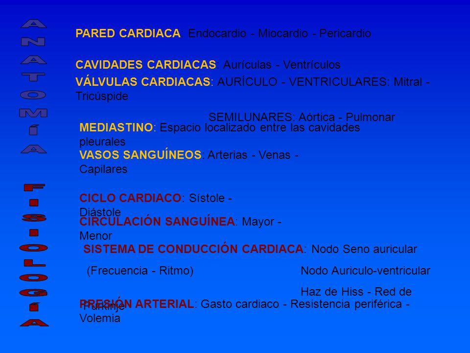 PARED CARDIACA: Endocardio - Miocardio - Pericardio CAVIDADES CARDIACAS: Aurículas - Ventrículos VÁLVULAS CARDIACAS: AURÍCULO - VENTRICULARES: Mitral