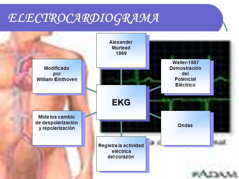 ELECTROCARDIOGRAMA EKG Alexander Murtead 1869 Waller-1887 Demostración del Potencial Eléctrico Ondas Registra la actividad eléctrica del corazón Mide