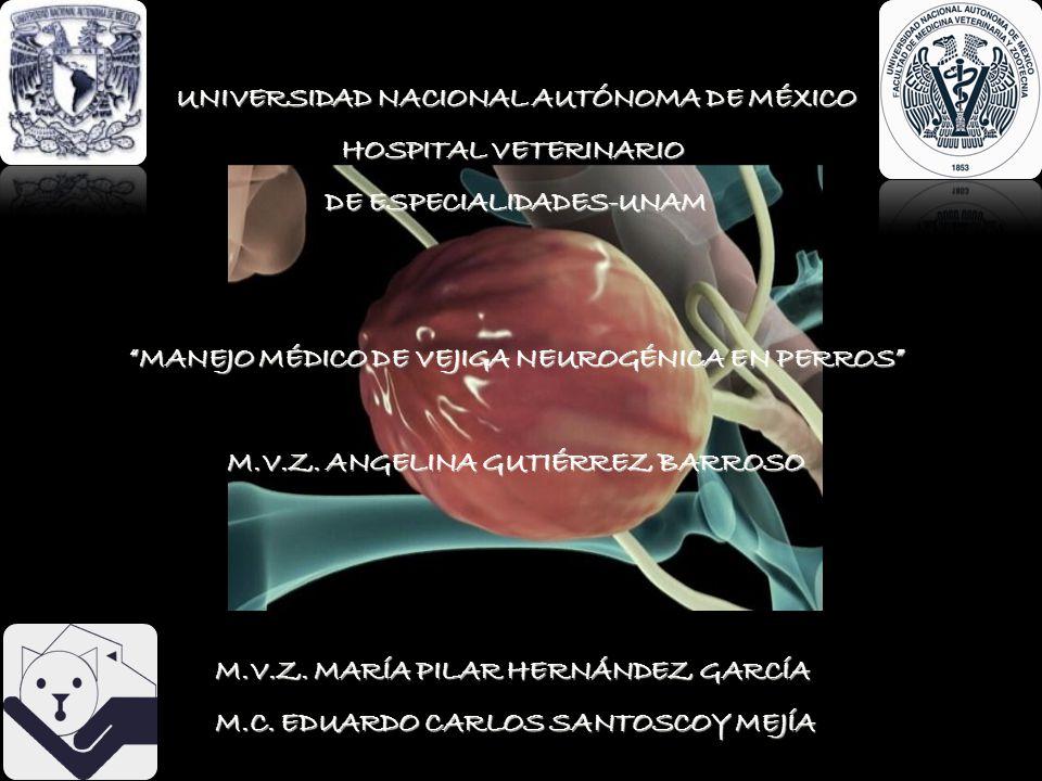 UNIVERSIDAD NACIONAL AUTÓNOMA DE MÉXICO HOSPITAL VETERINARIO DE ESPECIALIDADES-UNAM MANEJO MÉDICO DE VEJIGA NEUROGÉNICA EN PERROS M.V.Z. ANGELINA GUTI