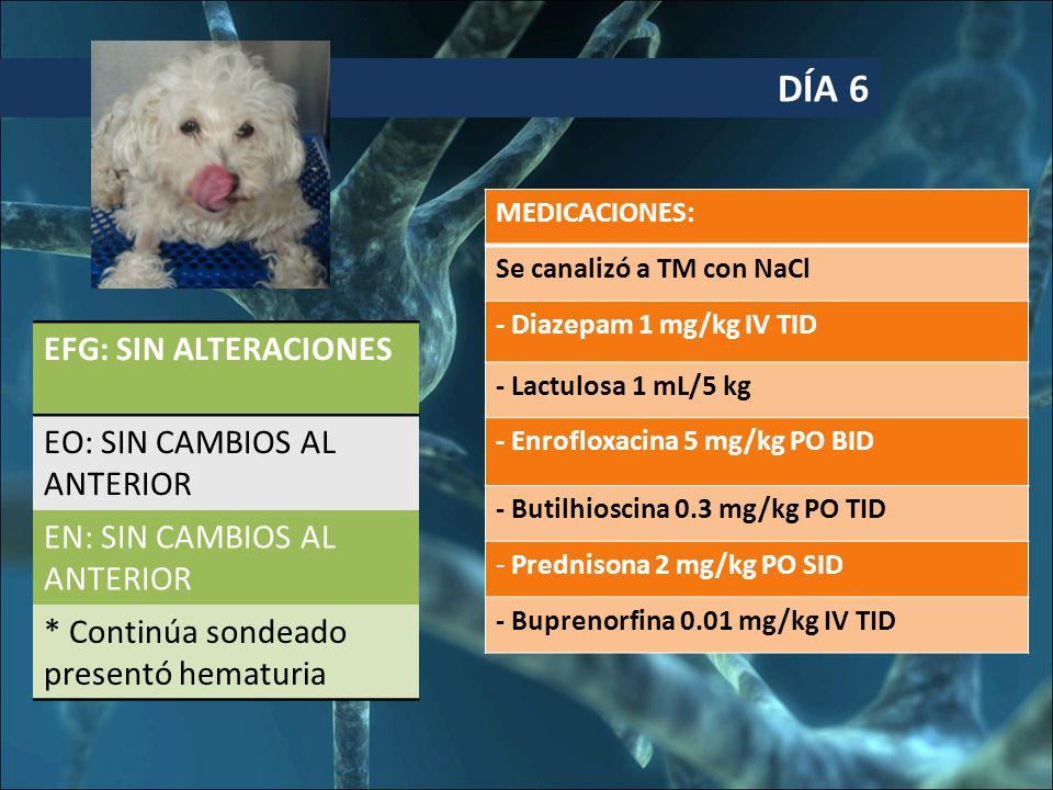DÍA 6 EFG: SIN ALTERACIONES EO: SIN CAMBIOS AL ANTERIOR EN: SIN CAMBIOS AL ANTERIOR * Continúa sondeado presentó hematuria MEDICACIONES: Se canalizó a TM con NaCl - Diazepam 1 mg/kg IV TID - Lactulosa 1 mL/5 kg - Enrofloxacina 5 mg/kg PO BID - Butilhioscina 0.3 mg/kg PO TID - Prednisona 2 mg/kg PO SID - Buprenorfina 0.01 mg/kg IV TID