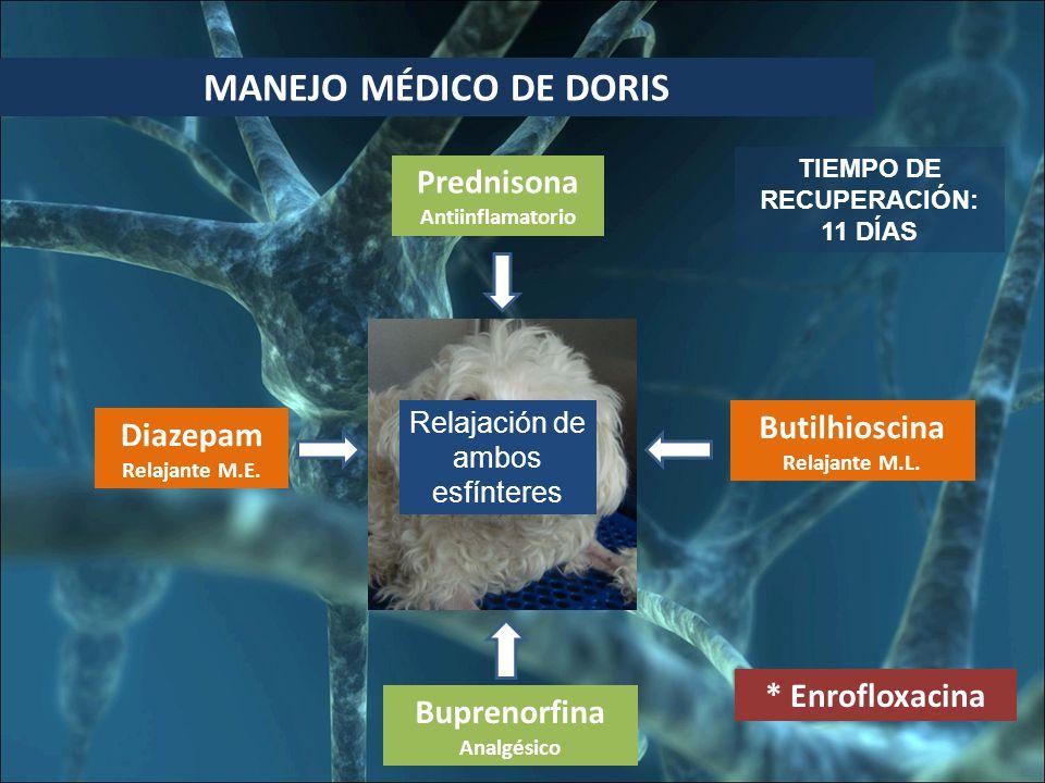 MANEJO MÉDICO DE DORIS * Enrofloxacina Prednisona Antiinflamatorio Buprenorfina Analgésico TIEMPO DE RECUPERACIÓN: 11 DÍAS Relajación de ambos esfínteres Diazepam Relajante M.E.