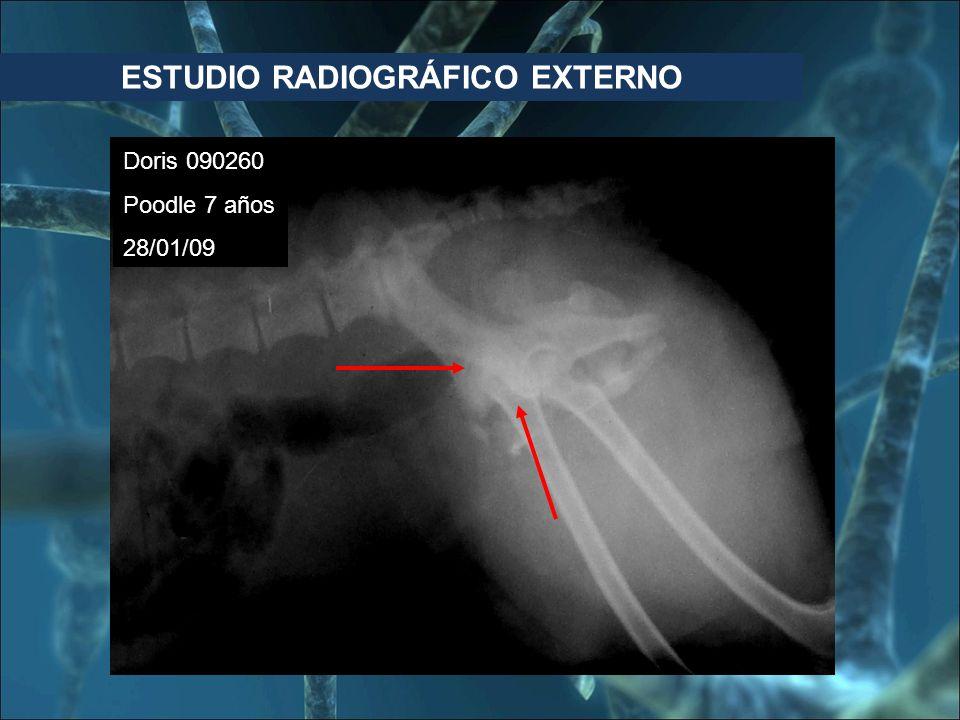 Doris 090260 Poodle 7 años 28/01/09 ESTUDIO RADIOGRÁFICO EXTERNO