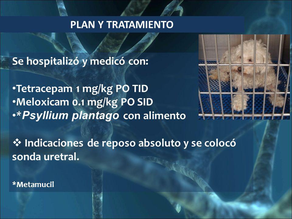 PLAN Y TRATAMIENTO Se hospitalizó y medicó con: Tetracepam 1 mg/kg PO TID Meloxicam 0.1 mg/kg PO SID * Psyllium plantago con alimento Indicaciones de