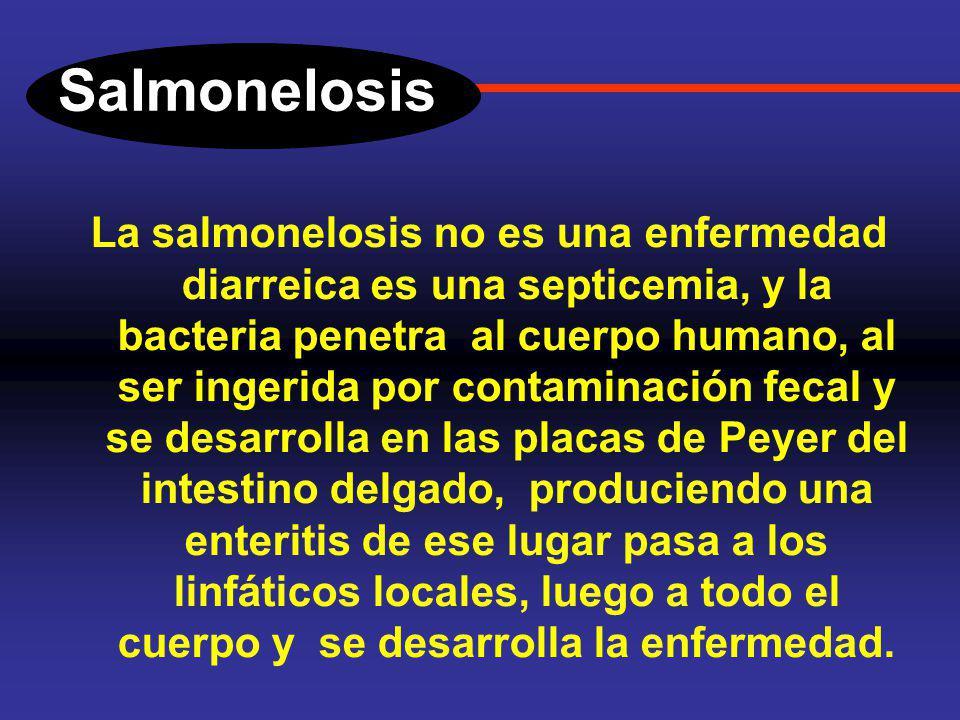 Salmonelosis Introducción. La infección por la Salmonella thifi es un problema frecuente en los países con condiciones socio-económicas precarias, se