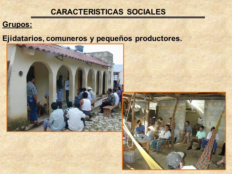 Grupos: Ejidatarios, comuneros y pequeños productores. CARACTERISTICAS SOCIALES