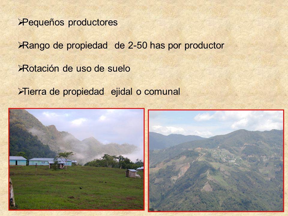 Pequeños productores Rango de propiedad de 2-50 has por productor Rotación de uso de suelo Tierra de propiedad ejidal o comunal