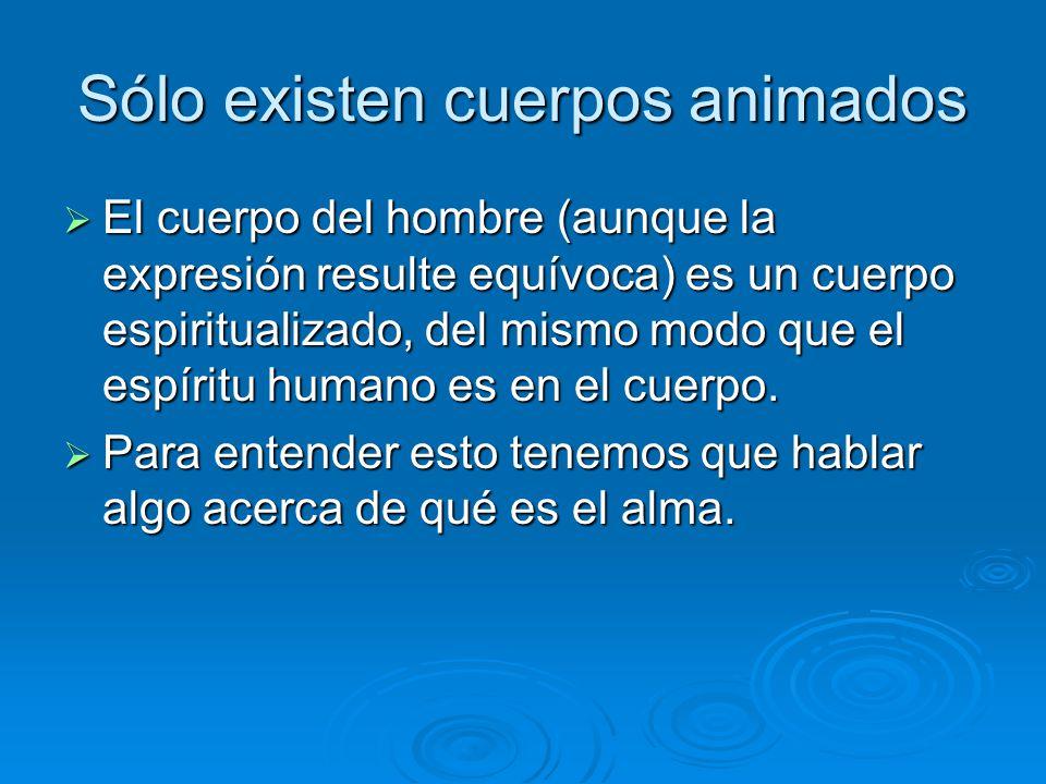 Sólo existen cuerpos animados El cuerpo del hombre (aunque la expresión resulte equívoca) es un cuerpo espiritualizado, del mismo modo que el espíritu