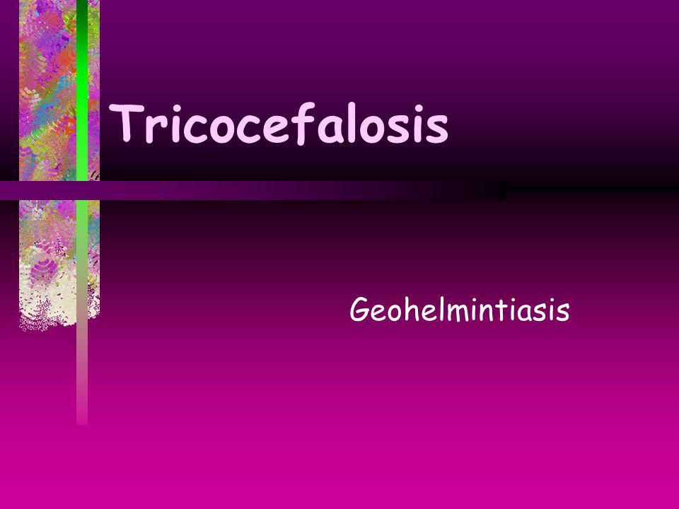 Tricocefalosis Geohelmintiasis