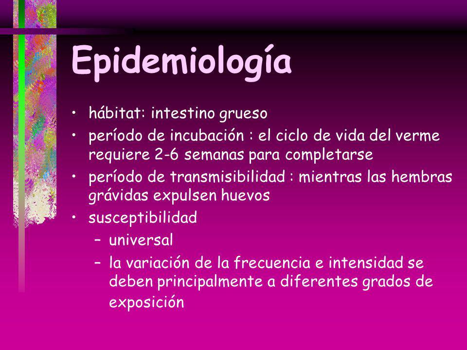 Epidemiología hábitat: intestino grueso período de incubación : el ciclo de vida del verme requiere 2-6 semanas para completarse período de transmisib