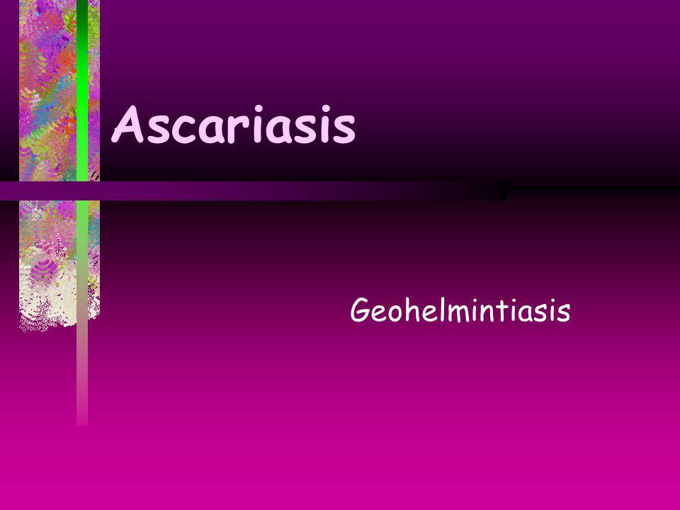 Ascariasis Geohelmintiasis